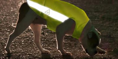 gilet securité chien