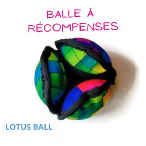Balle récompenses lotus multicolore pen ar dog
