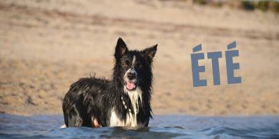 été by pen ar dog chien chaleur baignades